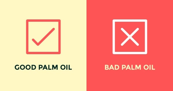 Palm Oil – What is it doing to our Children's future?