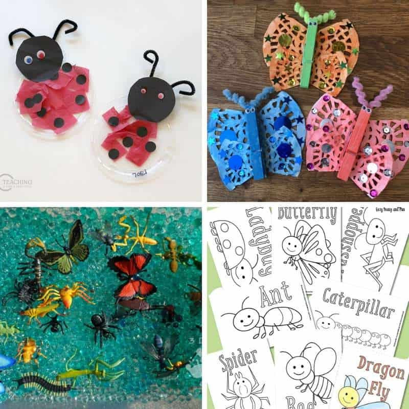 bug and insect activities for toddlers