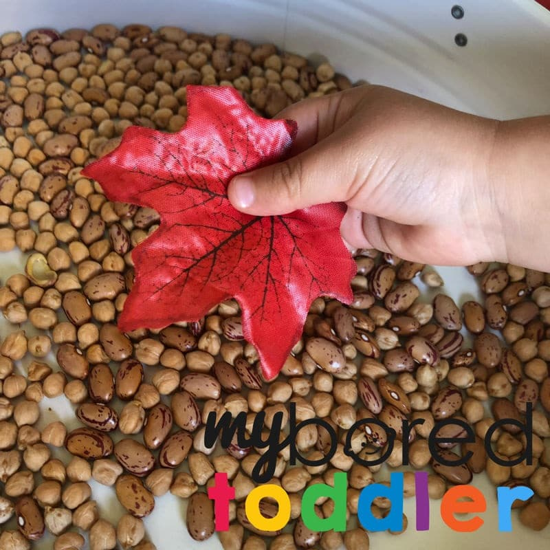 Autumn Fall Sensory Bin using scooping and Pouring 6