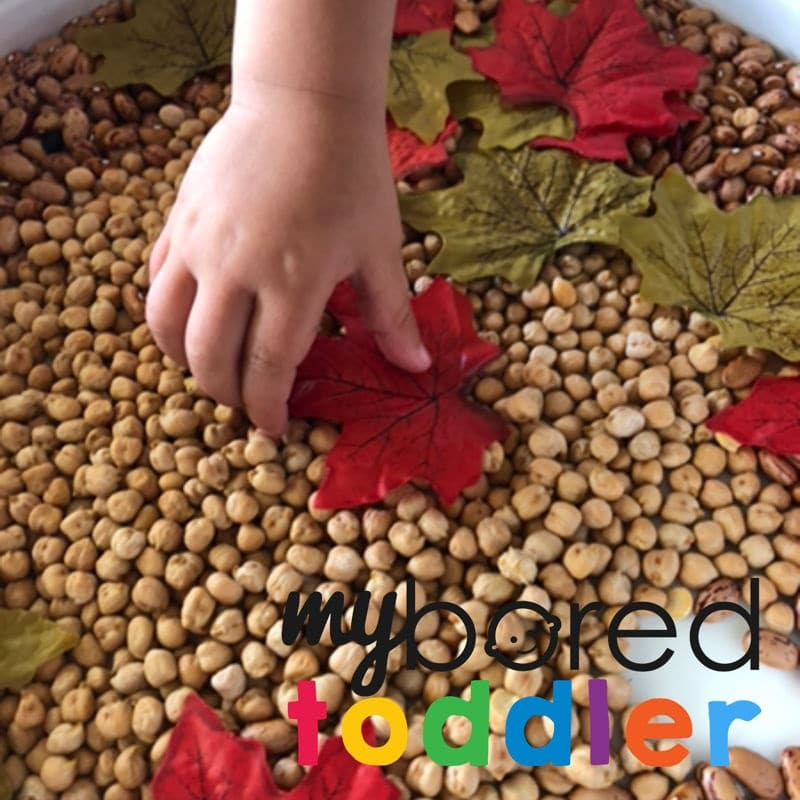 scooping and pouring autumn and fall sensory bin image 3