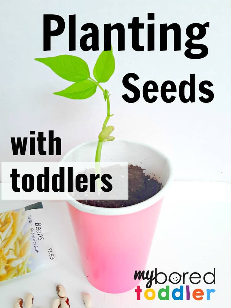 Planting Seeds with Toddlers